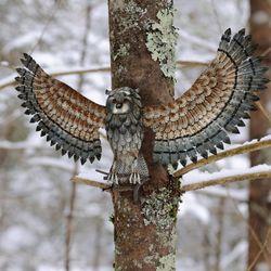 Wise Owl Wall Art Multi Earth