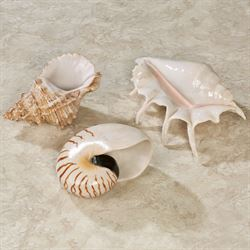 Soothing Shells Wall Art Ivory Set of Three