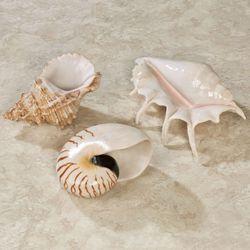 Soothing Shells Wall Art Ivory Set of Three