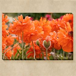 Dazzling Poppies Canvas Wall Art Multi Bright