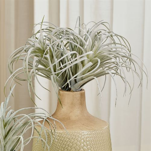 Air Plant Spray Accents Green Set of Two